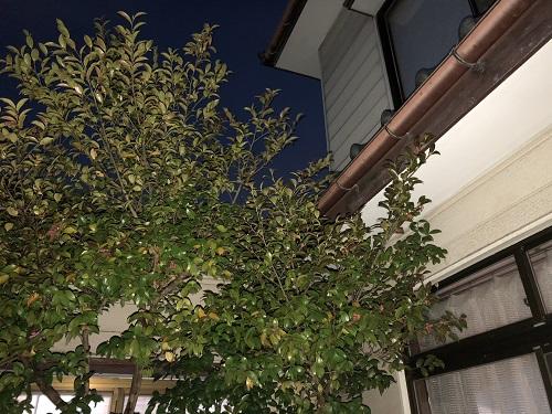 新潟市東区 雨漏り 現調 夜
