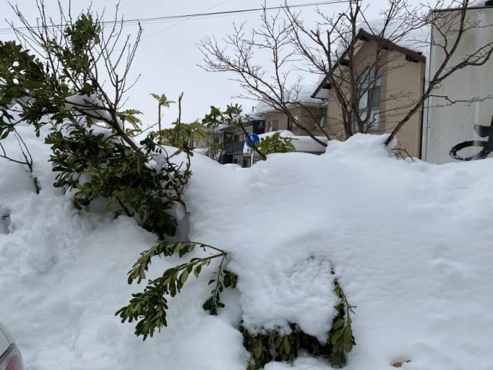 樹木倒壊し越境