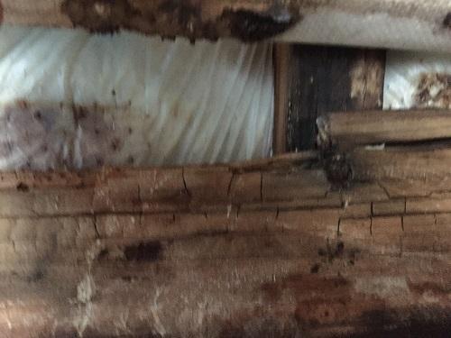 外壁下地 貫 腐食 交換